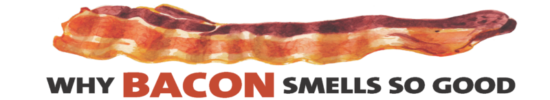 Why bacon smells so good